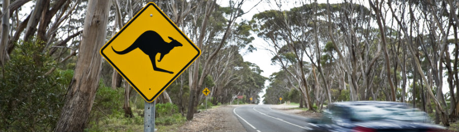 country road in Australia with sign for Kangaroos