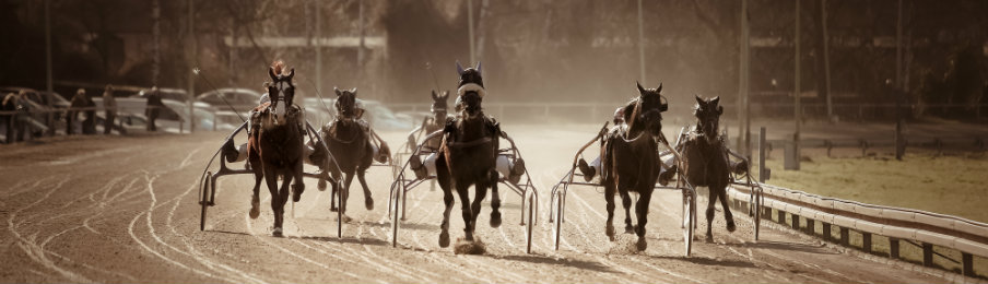 harness racing competition