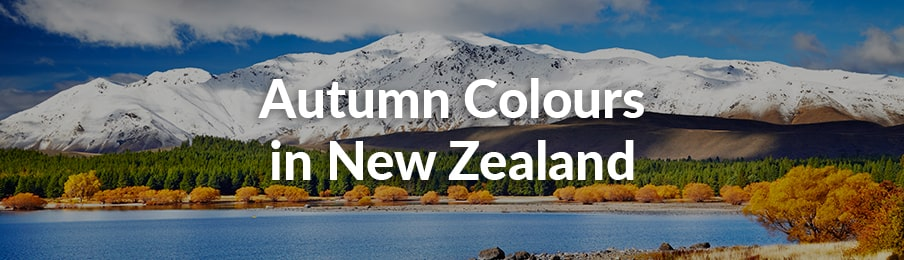 autumn colours in new zealand