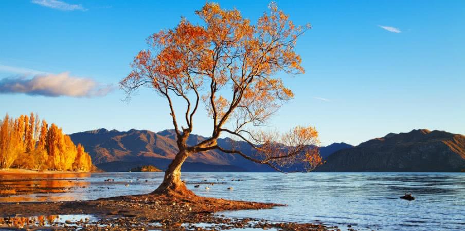autumn landscape lake wanaka