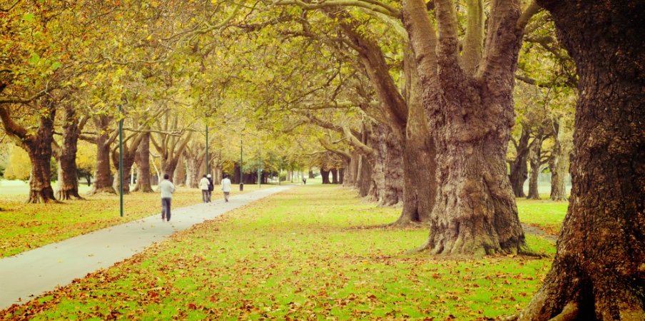 avenue of trees autumn leaves