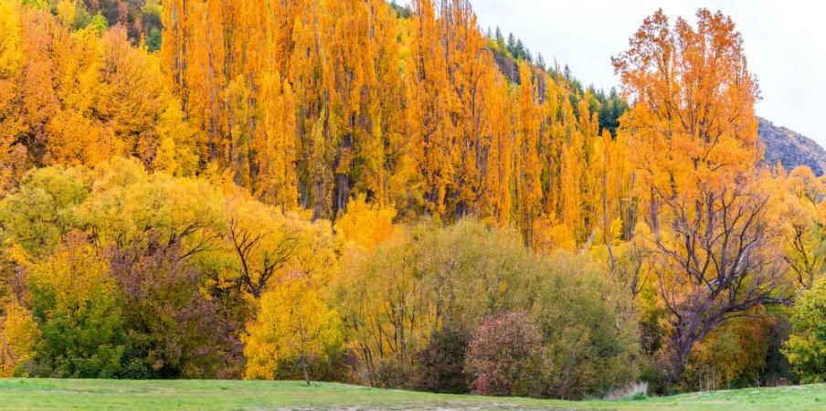 colourful autumn foliage arrowtown otago
