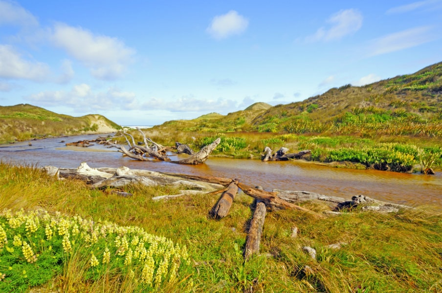Duck Creek in Mason Bay Dunes, Stewart Island, NZ