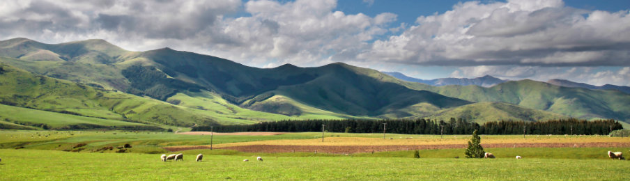 Green farmland in New Zealand