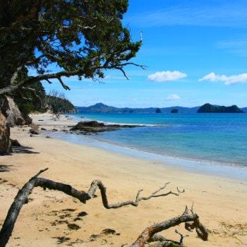 hahei beach coromandel landscape