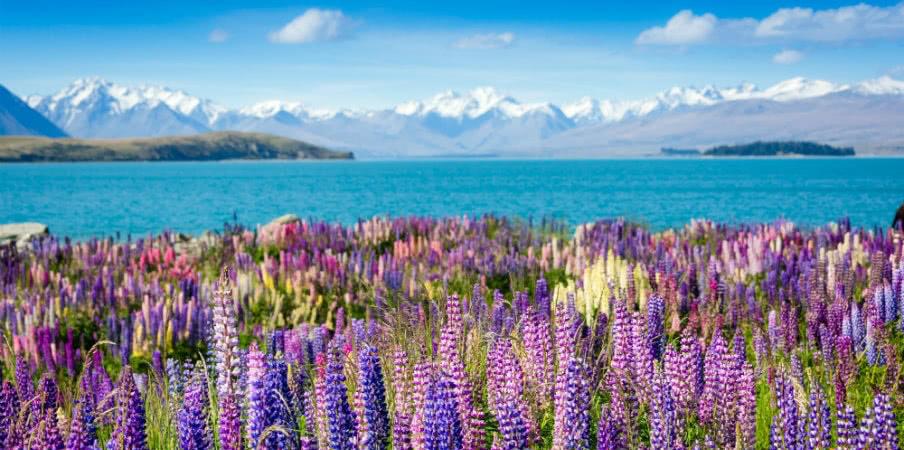 majestic mountain tekapo lake
