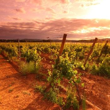 marlborough wine trail