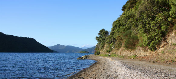 scenic seaside at picton in nz