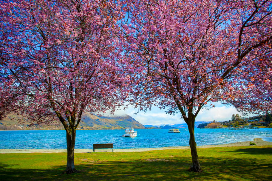 Pink flowers blooming in Lake Wanaka