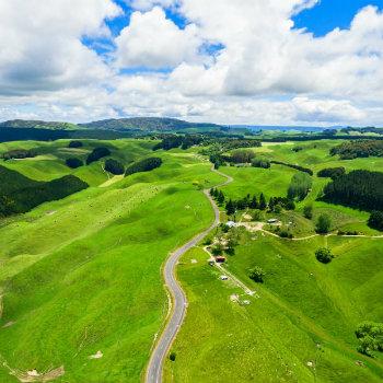 Rolling hill in Rotorua, North Island, NZ