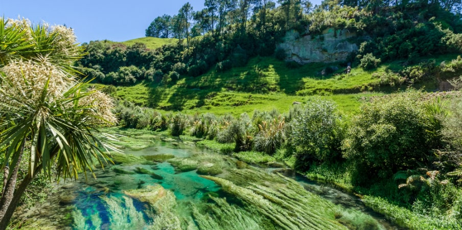 Blue Springs in Waikato